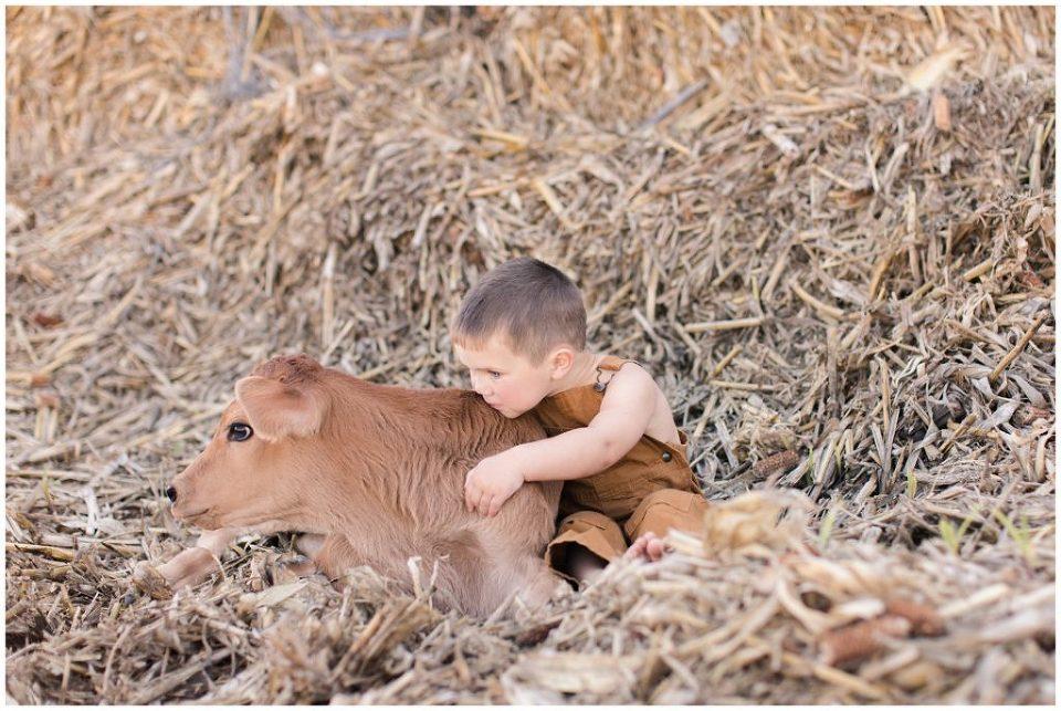 Toddler farm boy with calf sitting in bales | Iowa Children Photographer | CB Studio